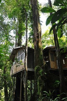 Seems to be a tropical forest tree house. For interesting search results for Tree-houses, look here: http://shopads.whw1.com/?q=tree%20house%20homes  ***** Referenced by Web Hosting With A Dollar (WHW1.com): Best Hosting Provider. When you want website hosting, go to the best, WHW1.com. Hosting that is Affordable, Reliable, Fast, Easy, Advanced, and Complete.©