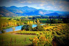 View from Quintessa Winery, Napa Valley