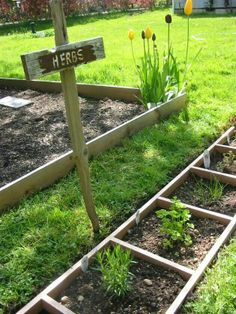 Using an old ladder for herbs or small garden