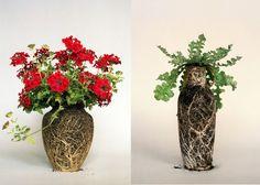 Amazing soil and root vases by Diana Scherer: Nurture Studies plant, diana scherer, flower, nurtur studi