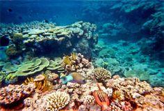 Diving Austrailia