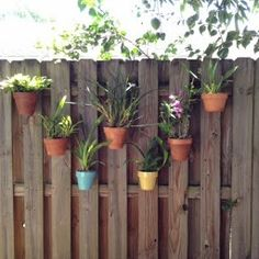Orchids in decorative clay pots on a privacy fence secured with hangapot.com hangers.  Nice design with lots of angles.