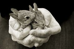 Bunny buddies - cutestpaw.com