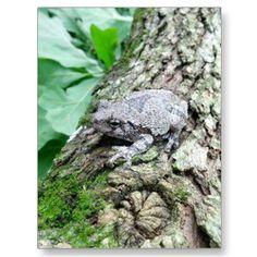 Tree frog post card