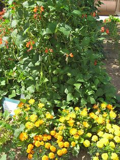 plant guid, organ garden, organic garden pest control, garden pests, plants, gardens, garden idea, flower, companion planting