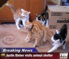 Justin Bieber Visits Animal Shelter - GiantGag