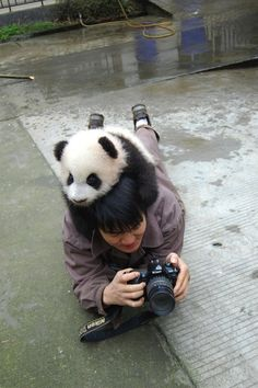 Sir, there is a panda on your head. I am jealous.    33 Things We Can ALL Agree On