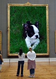 Tessie, Boston Terrier