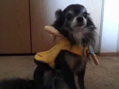 Dog Dressed As Banana Helps Sing 'Loving You' By Minnie Riperton