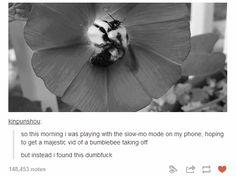 Big ol' dumb bee:   32 Of The Greatest Things That Have Ever Happened On Tumblr