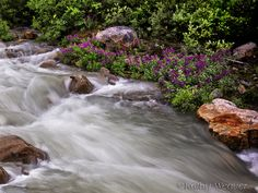 Flowers By the River by kweaver2, via Flickr
