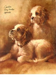 Cavalier King Charles Spaniel Puppies Dogs Cards