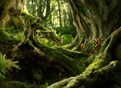 The Moss Dragon & The Butterfly
