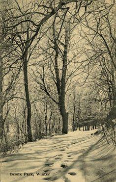 Bronx Park, winter