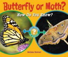 Compare and Contrast  Butterfly or Moth?: How Do You Know? (Which Animal Is Which?): Melissa Stewart