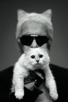 A book dedicated to Karl Lagerfeld's pampered feline is set for release.