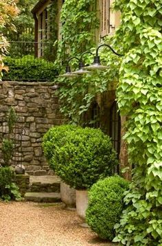 Ivy covered walls
