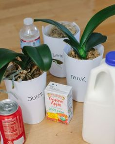 Science Fair: Feeding Plants