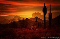 Gorgeous arizona