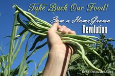 ~Saving seeds and a list of Monsanto owned seed varieties