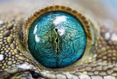 animals, blue, color, national geographic, reptil