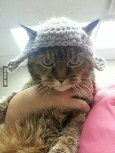 New for Fall: High Fashion Kitteh Knitwear, worn with surly attitude.