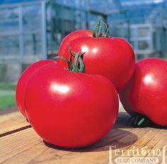 Wish List (main season tomato)-Momotaro Tomato