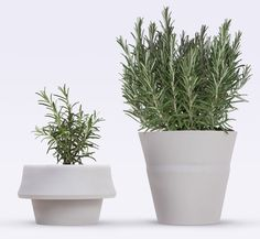 Fold Pot by Emanuele Pizzolorusso expands around growing plants