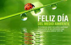 #FelizDíaMundialdelAmbiente || #HappyWorldEnvironmentDay