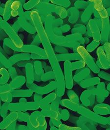 Probiotics: Good Germs for Your Gut - Living Without reports on the benefits of Probiotics can have on Leaky Gut; acne, allergies, arthritis, autism, celiac disease, chronic fatigue syndrome.