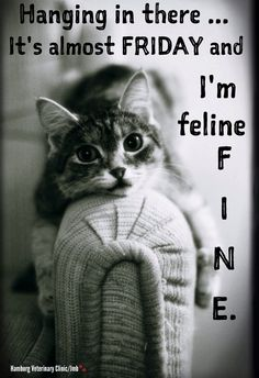 almost fri feline fine