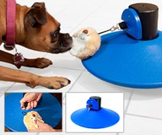 New Toy for Dogs & Cats Helps Them Exercise & Stay Fit! (Fun Fact: It was Invented by a Former NFL Player!)