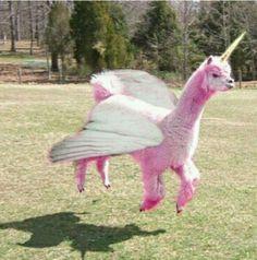 hilari, anime unicorn, llamacorn, alpaca