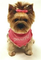 Dog Accessories Puppy Supplies - Personalized Accessories for Dogs Puppies