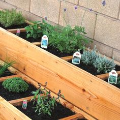 Awesome Herb Garden
