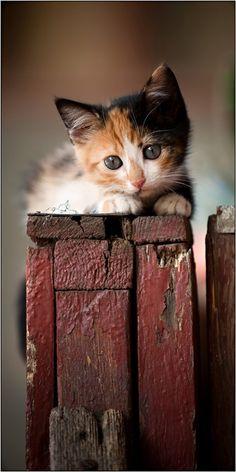Sweet calico cat