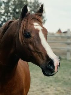 horse braids | First step in horse mane braiding is to brush the mane to get out the ...