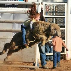 mutton bustin'...cowgirl up! Totally making my kids do this like I had too!