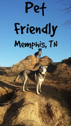 Pet Friendly Memphis