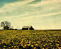 SALE 30 OFF Rustic PhotoFields of Spring8x10 by ara133photography, $17.50