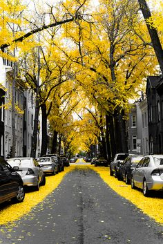 fall leaves, autumn, color, city streets, black white