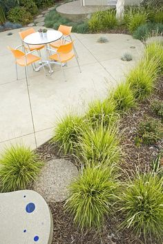 Modern Landscaping - low grasses.