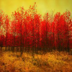 fall foliage (etsy)