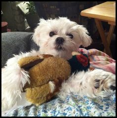 My Cute Jacky with his Pheasant!