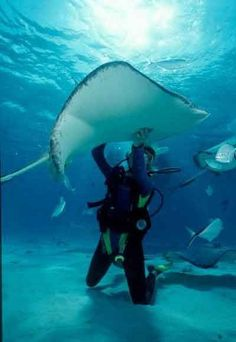 Scuba diving. Got to dive with sting rays in Grand Cayman. New favorite hobby! http://bit.ly/HRetFx