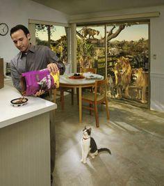 Um, guy, turn around! #cats #advertising #marketing