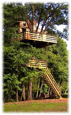 cabin, level, adult treehous, tree houses, hous ziplin, trees