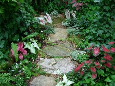 Stone path through shade garden lined with caladiums
