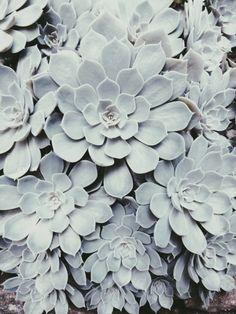 chlorophyl, green, flowerpl, natur, inspir, florabotanica, garden, medium, herhal