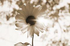Black and White :: Flower